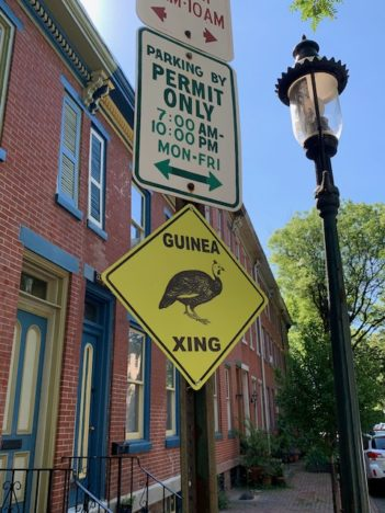 guineafowl warning sign in Trenton NJ