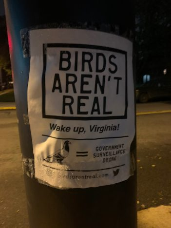 Birds as drone surveillance ?