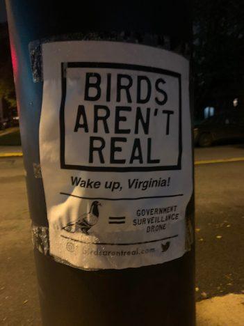 Birds as drone surveillance ?