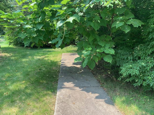 Bluff Road in Indianapolis: where the sidewalk ends