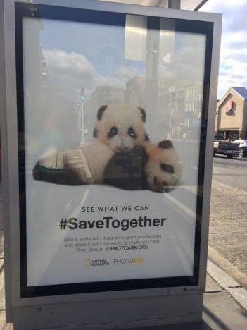 Giant pandas at DC bus stop